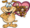 Sparkey Dog Eating Valentines Day Chocolates