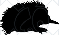Clipart Illustration of a Black Silhouetted Echidna Spiny Anteater ...