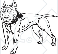Pitbull Black And White Clip Art Royalty-free (rf) clipart